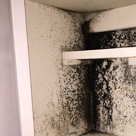 Why Mould Removal is Crucial!