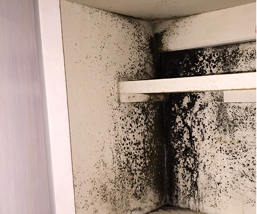 Wall covered with black mould.